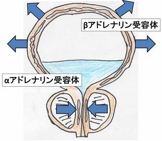 アドレナリン受容体.jpg