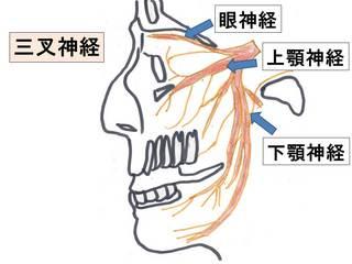 三叉神経.jpg