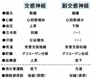交感神経と副交感神経.jpg