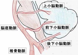 小脳の解剖.jpg