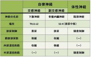排尿の表.jpg