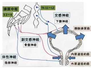 排尿調整�A.JPG