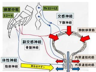 排尿調整�B.JPG