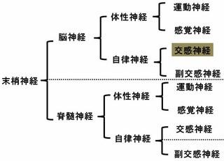 末梢神経の分類�C.jpg