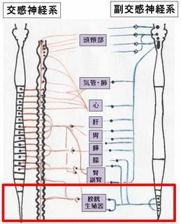 神経�G.jpg