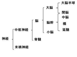 神経分類�A.jpg