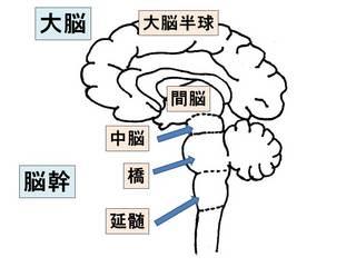 神経分類�B.jpg