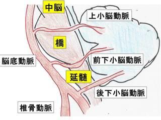 11小脳の解剖.jpg