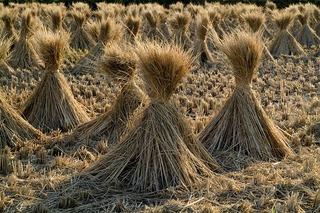straw-230112_640.jpg